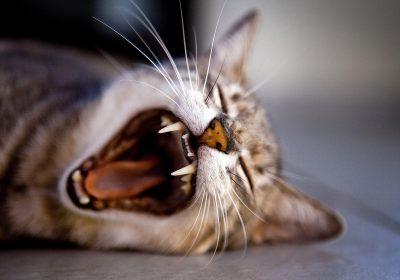 kitten-1257827_1920