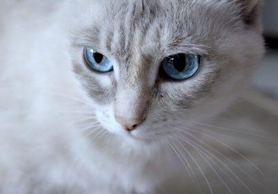 blue-eyes-2994641_1920