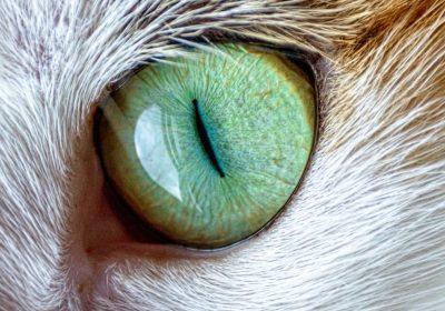 cat-1673283