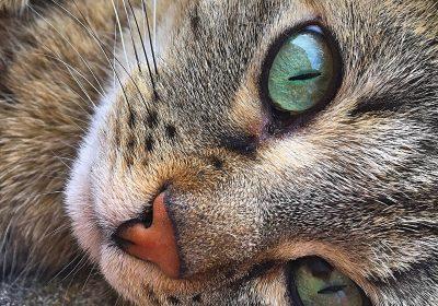 cat-2367165_1920