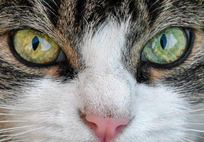 cat-2969932_1920