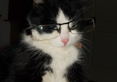 cat-with-glasses-361462_1920