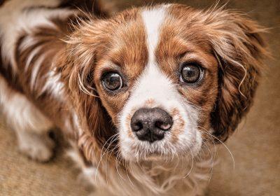dog-2785063_1920