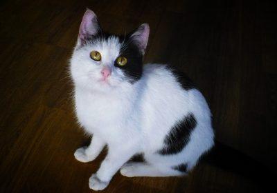 Towarzyska młoda koteczka szuka domu!